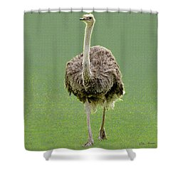 Emu Shower Curtain by Ellen Henneke