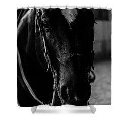 Equine Smile Shower Curtain