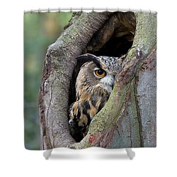 Shower Curtain featuring the photograph Eurasian Eagle-owl Bubo Bubo Looking by Rob Reijnen