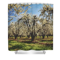 Shower Curtain featuring the photograph Everything Is New Again by Laurie Search