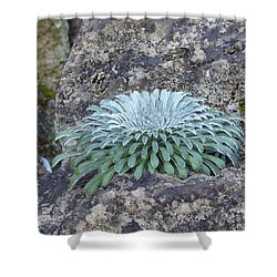 Exotic Plant Shower Curtain