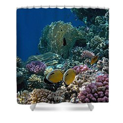 Exquisite Butterflyfish In The Red Sea Shower Curtain