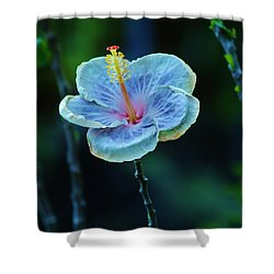 Fading Beauty Shower Curtain by Craig Wood