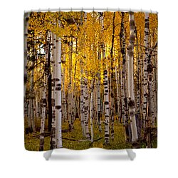 Fall At Snowbowl Shower Curtain