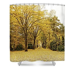 Shower Curtain featuring the photograph Carpet Of Golden Leaves by Ivy Ho