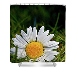 Fallen Daisy Shower Curtain