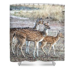 Family Outing Shower Curtain by Pravine Chester