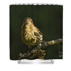 Shower Curtain featuring the photograph Female House Finch by Inge Riis McDonald