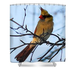 Shower Curtain featuring the photograph Female Northern Cardinal by Ricky L Jones