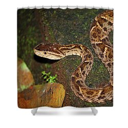 Shower Curtain featuring the photograph Fer-de-lance, Bothrops Asper by Breck Bartholomew