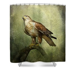 Ferruginous Hawk Shower Curtain