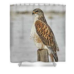 Ferruginous Hawk Shower Curtain by Doug Herr