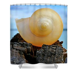 Shower Curtain featuring the photograph Fibonacci by Skip Hunt