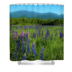 Shower Curtain featuring the photograph Field Of Lupines by Brenda Jacobs