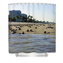 Fighting Conchs At Lowdermilk Park Beach In Naples, Fl Shower Curtain