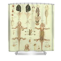 Fire Salamander Anatomy Shower Curtain