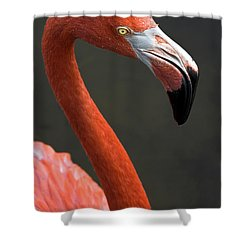 Flamingo Shower Curtain by Christopher Holmes