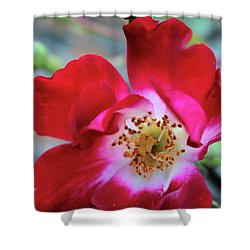 Flower Dance Shower Curtain