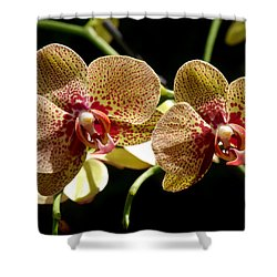 Shower Curtain featuring the photograph Flower Edition by Bernd Hau