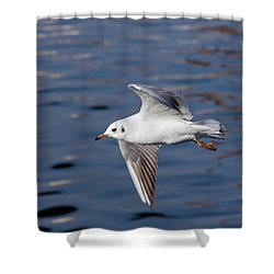 Flying Gull Above Water Shower Curtain by Michal Boubin