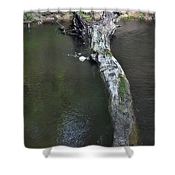 Shower Curtain featuring the photograph Footbridge by Skip Willits