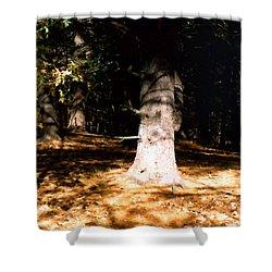 Forest Entrance Shower Curtain by Paul Sachtleben
