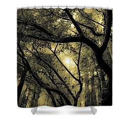 Forests Shower Curtain