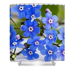 Shower Curtain featuring the photograph Forget-me-not by Chevy Fleet