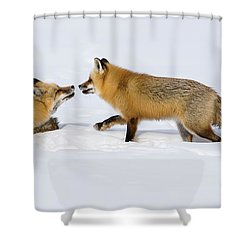 Shower Curtain featuring the photograph Fox Love by Brenda Jacobs