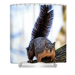 Shower Curtain featuring the photograph Fox Squirrel On Alert by Onyonet  Photo Studios