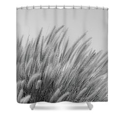 Foxtails On A Hill In Black And White Shower Curtain