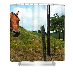 Friendly Stallions Shower Curtain