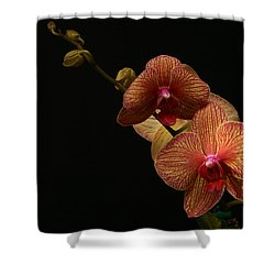 Friendship Shower Curtain by Doug Norkum