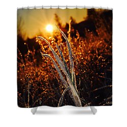 Frosty Sunrise Shower Curtain