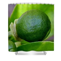 Shower Curtain featuring the photograph Gapefruit by Werner Lehmann