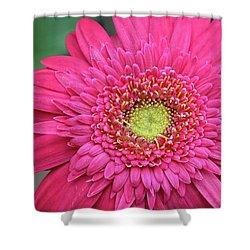 Gerbera Daisy Shower Curtain by Ronda Ryan
