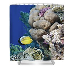 Glorious Red Sea World 3 Shower Curtain