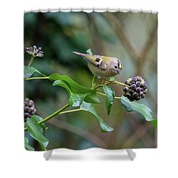 Goldcrest Shower Curtain