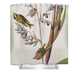 Golden-crested Wren Shower Curtain