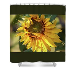 Golden 2 - Shower Curtain