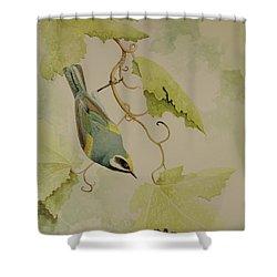 Golden-winged Warbler Shower Curtain