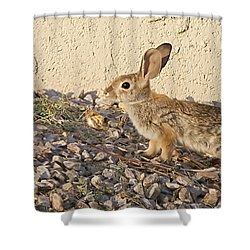 Shower Curtain featuring the photograph Good Morning Sunshine by Anne Rodkin
