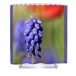 Shower Curtain featuring the photograph Grape Hyacinth by Chris Berry