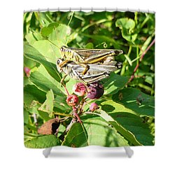 Grasshopper Love Shower Curtain
