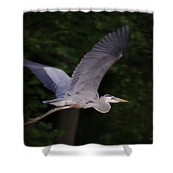 Great Blue Heron In Flight Shower Curtain by Brian Wallace
