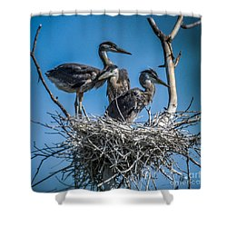Great Blue Heron On Nest Shower Curtain