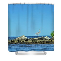 Great Blue Heron On The Chesapeake Bay Shower Curtain