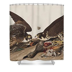 Great-footed Hawk Shower Curtain by John James Audubon