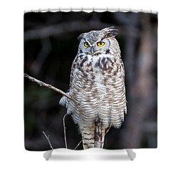 Great Horned Owl  Shower Curtain by Jack Bell