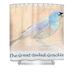 Shower Curtain featuring the digital art Great Tailed Grackle by A Gurmankin
